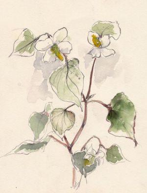 名前に似合わず楚々たるドクダミの花