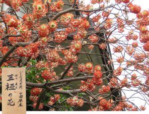 珍しい花が