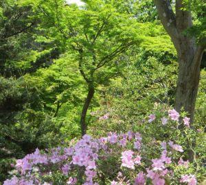京都の新緑